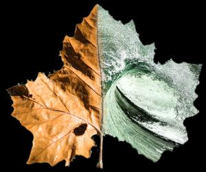 Forest2Sea Leaf Logo